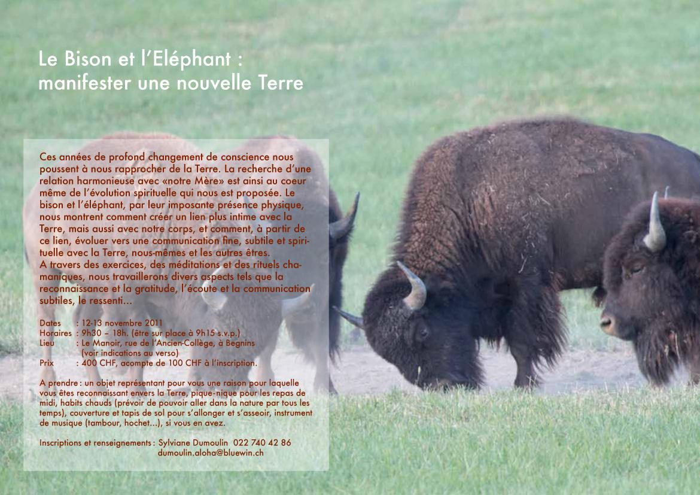 Stage Bison éléphant-2