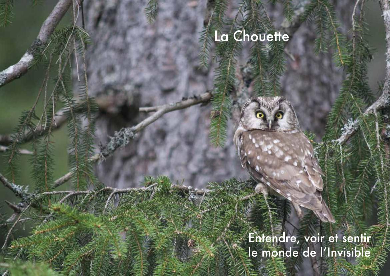 Stage  la Chouette