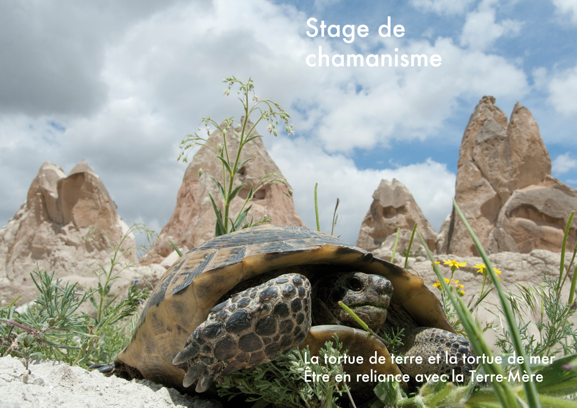 "Stage ""la Tortue "" 2013"