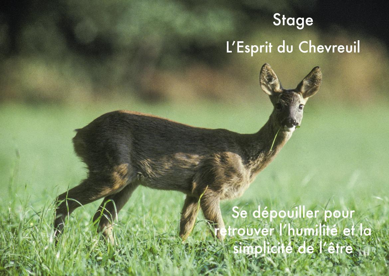 Stage du Chevreuil 2014
