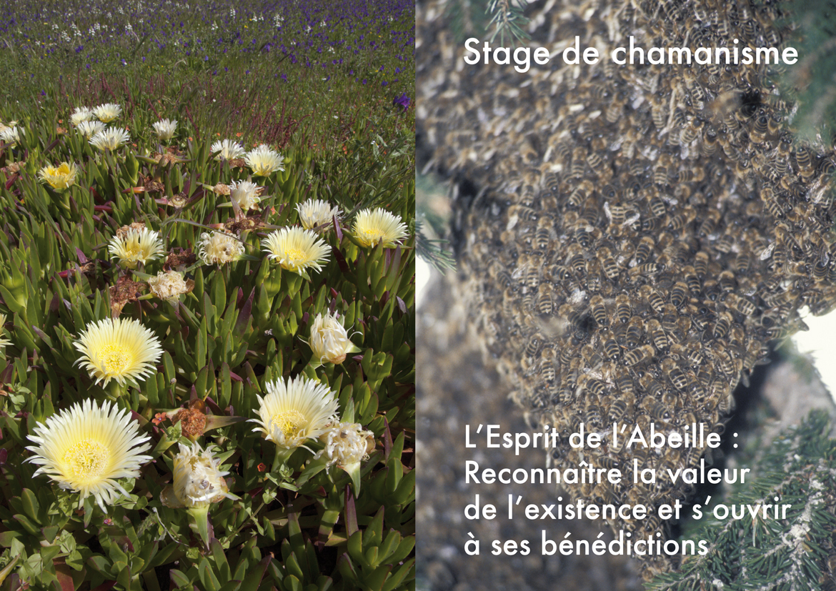 Stage L'Abeille 2015